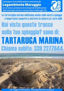 Hai visto tracce di TARTARUGHE MARINE sulla tua spiaggia? Segnalalo subito chiamando il numero 339 2277644 – Campagna di Sensibilizzazione promossa dalla LEGAMBIENTE di Maruggio (Ta)