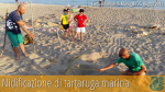 Non sono state trovate uova di tartaruga marina nel presunto sito di nidificazione, scoperto oggi – 25 giugno 2016 – a Campomarino di Maruggio (Ta)