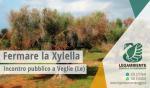 """Xylella: dipartimento Regione Puglia conferma 5 nuovi focolai. Incontro pubblico a Veglie (Le) """"Fermare malattia e dare alternativa ad agricoltori danneggiati"""""""