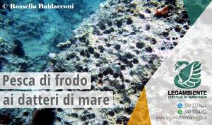 La pesca del dattero è vietata: ecco perché! di Rossella Baldacconi, PhD in Scienze Ambientali