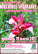 """Domenica 19 marzo 2017 alle ore 10:30 si va """"alla scoperta delle ORCHIDEE SPONTANEE nelle campagne di Maruggio (Ta)"""", prima passeggiata naturalistica a cura della LEGAMBIENTE di Maruggio"""