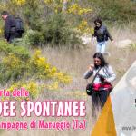 """Si è svolta domenica 19 marzo 2017 l'iniziativa """"alla scoperta delle ORCHIDEE SPONTANEE nelle campagne di Maruggio (Ta)"""", prima passeggiata naturalistica a cura della LEGAMBIENTE di Maruggio"""