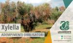 EMERGENZA XYLELLA DELL'OLIVO, adempimenti obbligatori in tutto il territorio del Comune di Maruggio (Ta)