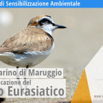 Le spiagge di Campomarino di Maruggio ospitano importanti siti di nidificazione, del raro Fratino Eurasiatico. Campagna di sensibilizzazione ambientale promossa dalla Legambiente di Maruggio