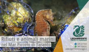 """Rifiuti e animali marini sul fondo del Mar Piccolo di Taranto: """"tutto si riutilizza!"""" di Rossella Baldacconi"""