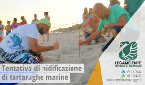 """Nuovo tentativo di nidificazione di una tartaruga marina della specie """"Caretta Caretta"""", lunedì 31 luglio 2017, in località """"Piri Piri"""" a Campomarino di Maruggio (Ta)"""