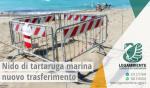 """Le mareggiate di questi giorni costringono ad un nuovo trasferimento le 71 uova di tartaruga marina della specie """"Caretta caretta"""", recuperate il 13 agosto 2017 all'interno di un lido attrezzato a Campomarino di Maruggio (Ta)"""