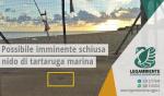 """Possibile imminente schiusa delle uova di tartaruga marina della specie """"Caretta caretta"""", recuperate il 13 agosto 2017 all'interno di un lido attrezzato a Campomarino di Maruggio (Ta)"""