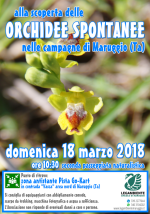 """Domenica 18 marzo 2018 alle ore 10:30 si va """"alla scoperta delle ORCHIDEE SPONTANEE nelle campagne di Maruggio (Ta)"""", seconda passeggiata naturalistica a cura della LEGAMBIENTE di Maruggio"""