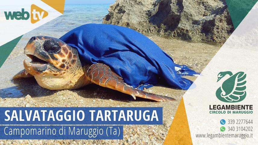 Salvataggio a Campomarino di Maruggio (Ta) di una tartaruga marina della specie Caretta caretta, affidata poi alle cure del C.R.T.M. (Centro Recupero Tartarughe Marine) WWF di Policoro