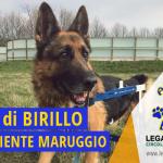 """Legambiente Maruggio accoglie nella propria organizzazione le volontarie dell'attivissima associazione animalista locale, dando vita alla sezione operativa: """"Amici di Birillo Legambiente Maruggio"""""""