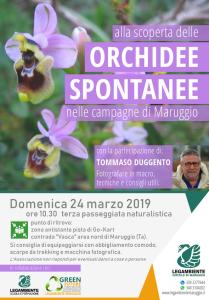 """Domenica 24 marzo 2019 tutti insieme """"alla scoperta delle ORCHIDEE SPONTANEE nelle campagne di Maruggio (Ta)"""", terza passeggiata naturalistica a cura della LEGAMBIENTE di Maruggio"""